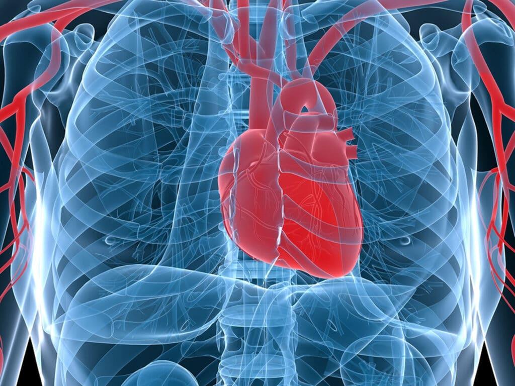 Home Care in Laguna Beach CA: Heart Health Information